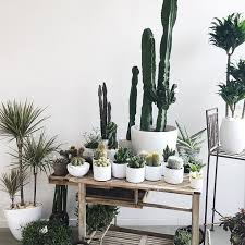 Seeking Cactus Cast 32 Best Cactus And Succulents Images On Succulents