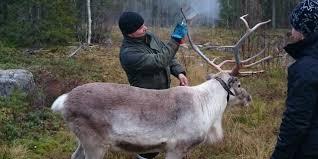 bbc autos the reindeer that glow in the dark