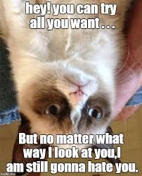 Kitty Meme Generator - grumpy cat meme hey you can try all you want but grumpy