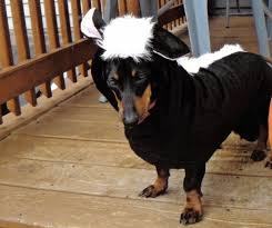 Dogs Halloween Costumes Pictures Lil U0027 Stinker Skunk Dog Halloween Costume Shipping