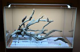 how to sink driftwood the planted tank forum