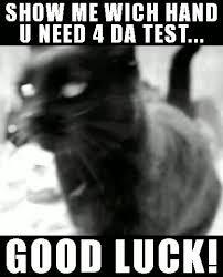 Good Luck Cat Meme - cat casino gifs search find make share gfycat gifs