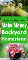 How To Make An Urban Garden - how to make an income from your backyard homestead ideas to get