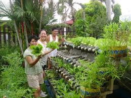 Patio Grow House Growing Fresh Food In Recycled Containers On A Bottle Rack The