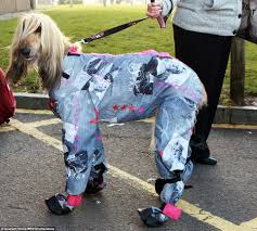 afghan hound owner reviews how crufts turned into a cat walk for dogs as canine u0027s don onesies