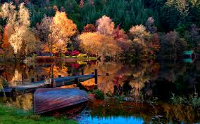 picture abandoned lake color nice leaves shore autumn