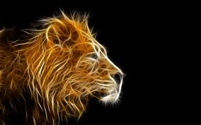 lion facts and pictures for kids wallpaper
