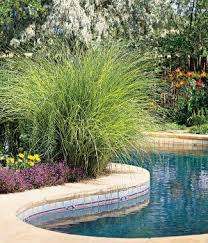 Landscaping Around Pool Best 25 Plants Around Pool Ideas On Pinterest Landscaping