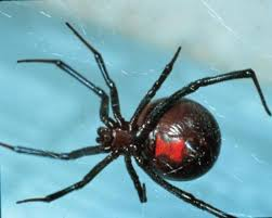 Image 325848 Misunderstood Spider Know - 29 best spiders hell no images on pinterest ha ha fun things