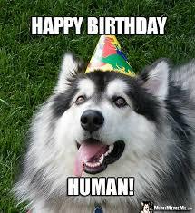 Happy Birthday Dog Meme - handsome dog wearing party hat says happy birthday human funny