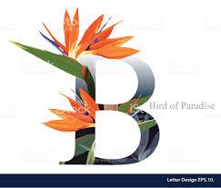 letter b vector alphabet with bird of paradise flower stock vector