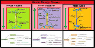 100 free downloadable science diagrams biology show me a
