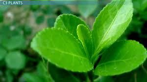 images of plants c3 plants definition types u0026 examples video u0026 lesson