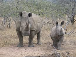 rhinoceros and tiger conservation fund