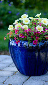 34 best garden advice videos images on pinterest flower pots