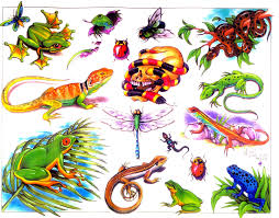 best frog tattoo design in 2017 real photo pictures images and
