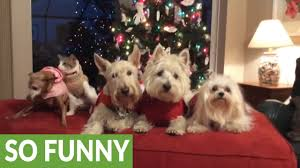 four dogs and a cat pose for christmas picture youtube