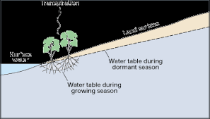 Define Water Table Evapotranspiration The Water Cycle From Usgs Water Science