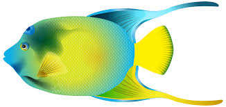 angel fish clip art clip art library