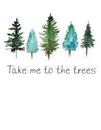 pine tree cones 1724031 veganism pinterest pine tree art