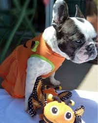 matching dog and owner halloween costumes dogs in halloween costumes can you resist martha stewart