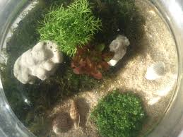 membuat aquascape bening aquascape murah meriah ala saya perjalanan hati