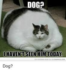 Sexy Dog Meme - dog sexy russians near you on damnlolcom dog meme on