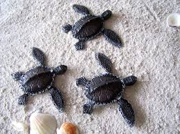 wonderful decoration turtle wall decor bold and modern 20 best