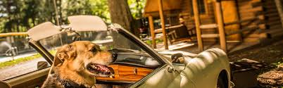 cabin camping camping cabin rentals koa campgrounds