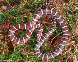 How To Find Snakes In Your Backyard Snakes Of New York