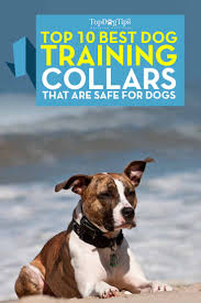 Radio Collar For Beagle Top 10 Best Dog Training Collars That Are Safe For Dogs In 2017