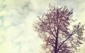 wallpaper vintage clouds vintage nature tree tree
