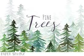 watercolor pine trees pack illustrations creative market