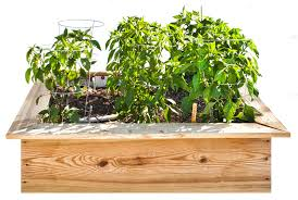 sweet and spicy 4 x 4 foot pepper garden bonnie plants