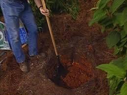 how to plant a shrub how tos diy