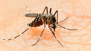 mosquito borne zika virus is spreading in the americas what do we