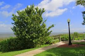newton park lake apopka lakeview park winter garden orange