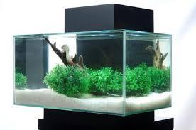 fluval edge 6 gallon aquarium with 21 led light