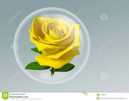 3d yellow rose in glass ball royalty free stock image image