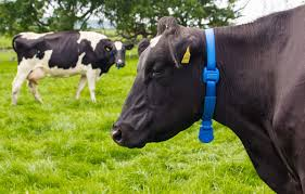 introducing the wireless cow