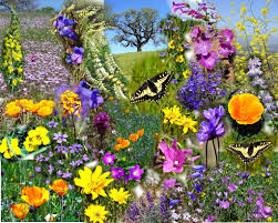 spring flowers flowers of spring flowers magazine