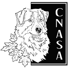 australian shepherd 2015 nationals cnasa canadian national australian shepherd association