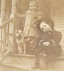 american pitbull terrier z hter deutschland 1241 best dogs images on pinterest