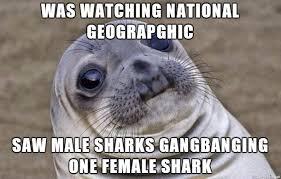 Gang Bang Memes - i saw a shark gangbang on tv meme on imgur