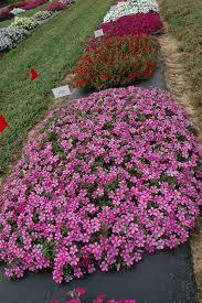 agrilife extension plant propagation program oct 29 in san