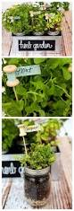 top 25 best mason jar herb garden ideas on pinterest mason jar