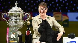 affenpinscher crufts 2014 crufts 2016 dog show images and results i petsworld pets world