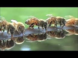 Raising Bees In Backyard by Bees Need A Water Source In Your Backyard Add Lava Rocks From A