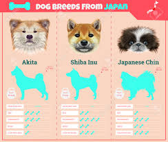 dogs breed vector infographics types of dog breeds from japan