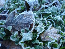 3 tips on caring for your winter garden in arizona green keeper